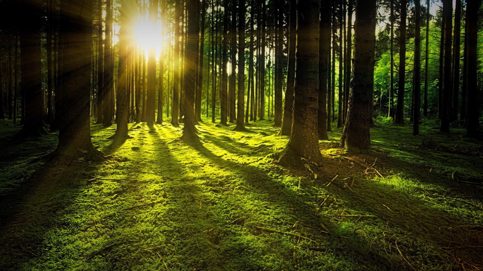 Ins Kino gehen und Bäume pflanzen...